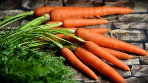 Морковь: описание, посадка в открытый грунт, уход, подкормка (Фото & Видео) +Отзывы
