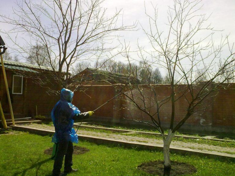 Обработка дерева от болезней и насекомых