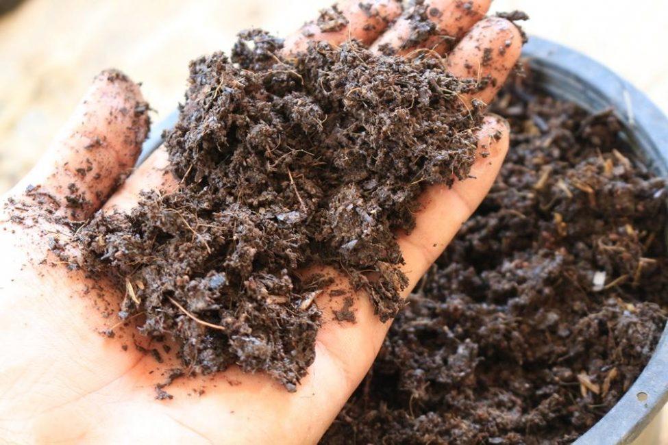 Перегной, образовавшийся в результате перепревания компоста
