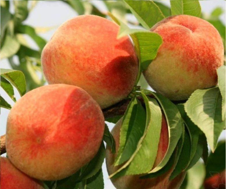 Персик фьюри
