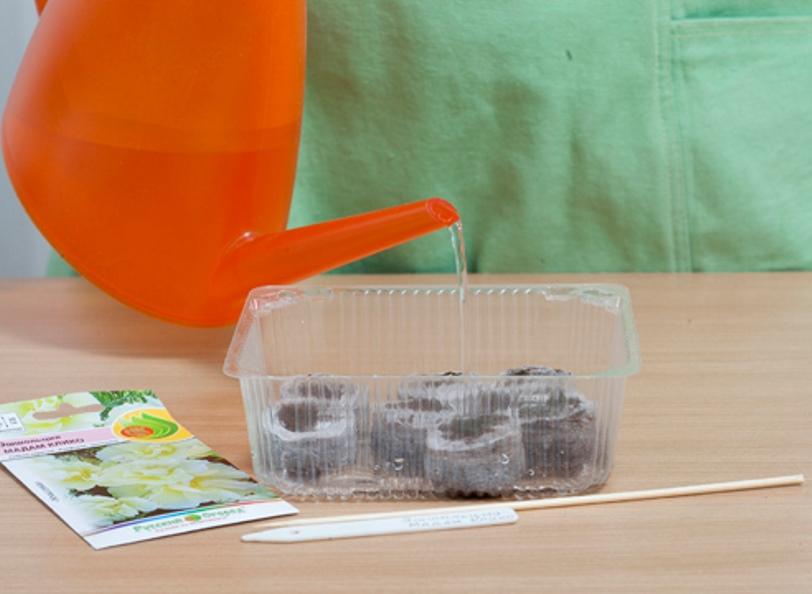 Подготовка торфяных таблеток для посадки рассады