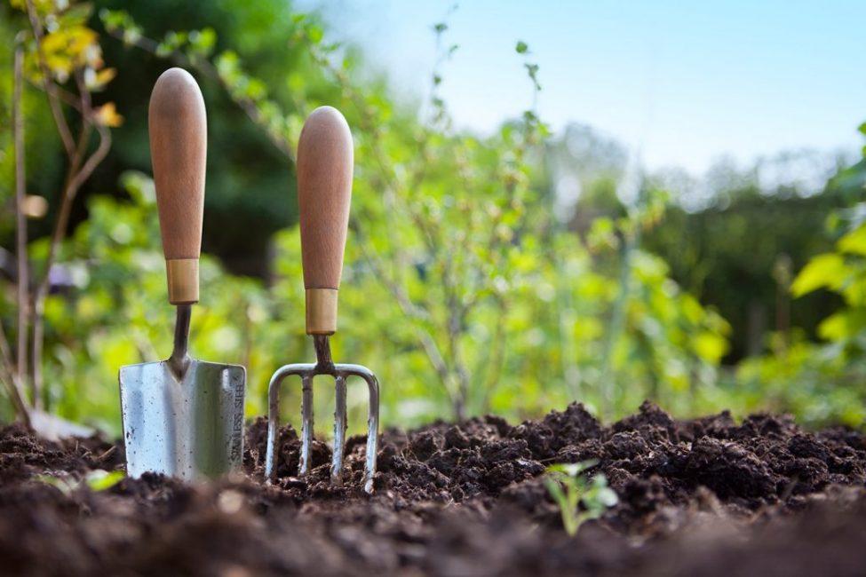 Удобряя кустарник можно получить красивую и пыщную его форму