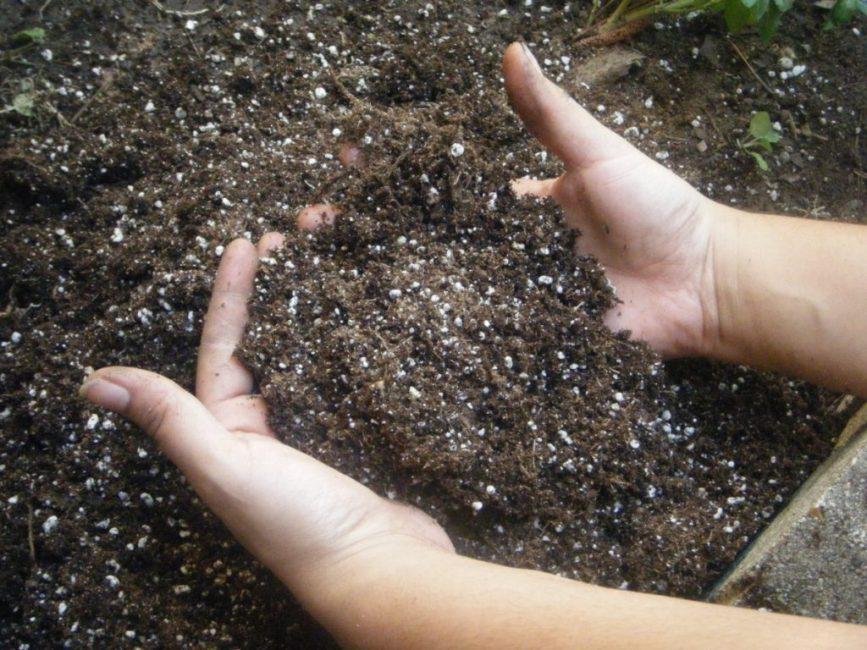Рекомендуется подкормить почву перед посадкой