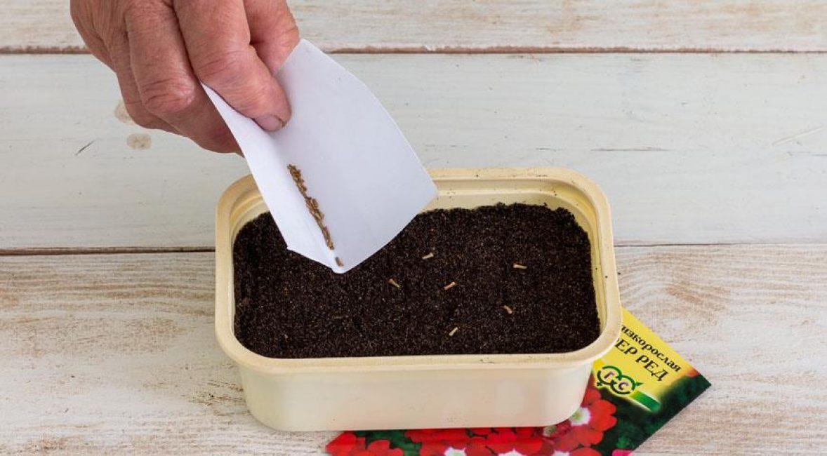 Посадка семян в ящик для рассады