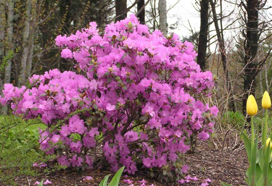 Весна и осень - лучшее время для посадки растения