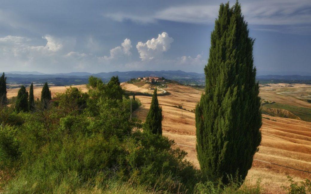 Произрастание дерева в естественной среде