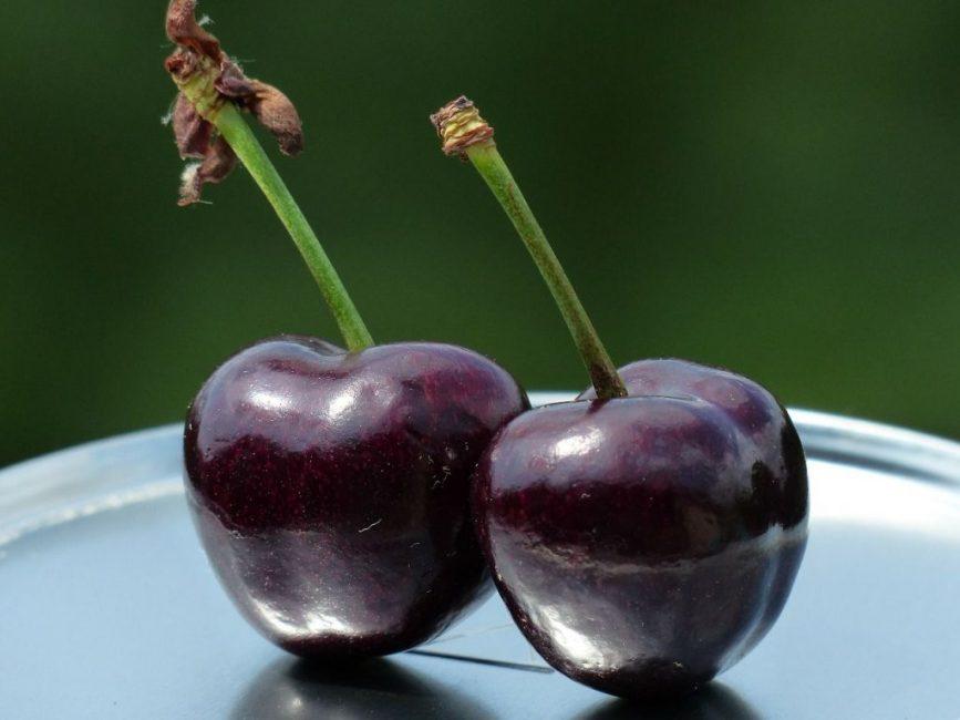 Размножение сортового дерева позволит сэкономить на покупке саженцев