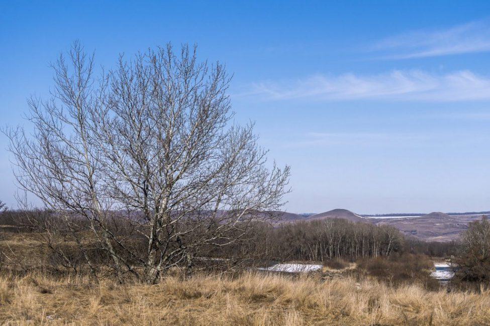 Ранняя весна – отличное время для посадки плодовых деревьев
