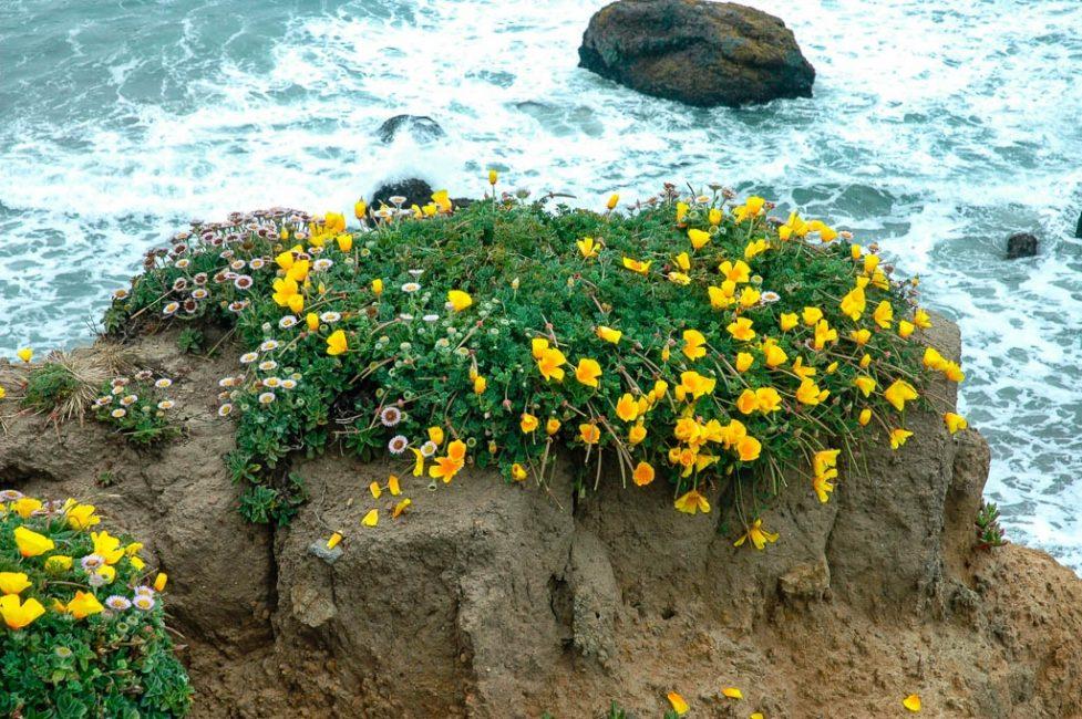 Растение может располагаться практически в любых солнечных местах