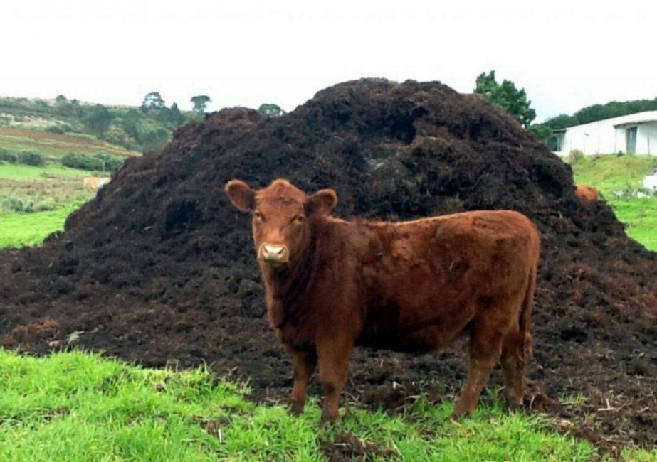 Самый распространенный вид органического удобрения на дачных участках