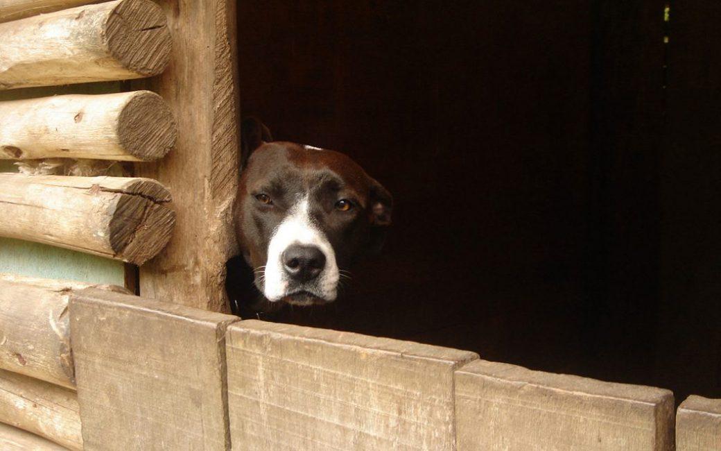 Сарай - не место для собаки