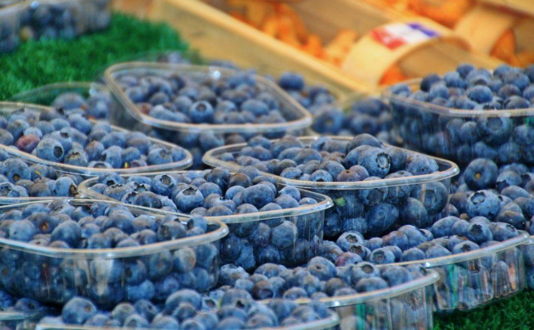 С одного куста можно получить до 10 килограммов ягод