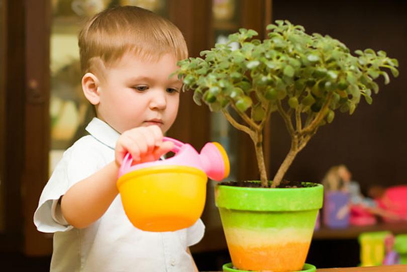 Ухаживая за своими зелеными насаждениями, ребенок готовится ко взрослой жизни и учится заботливо относится ко всему живому на Земле