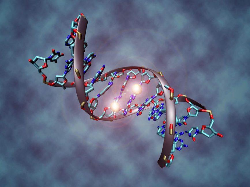 Фосфор - ключевой компонент ДНК