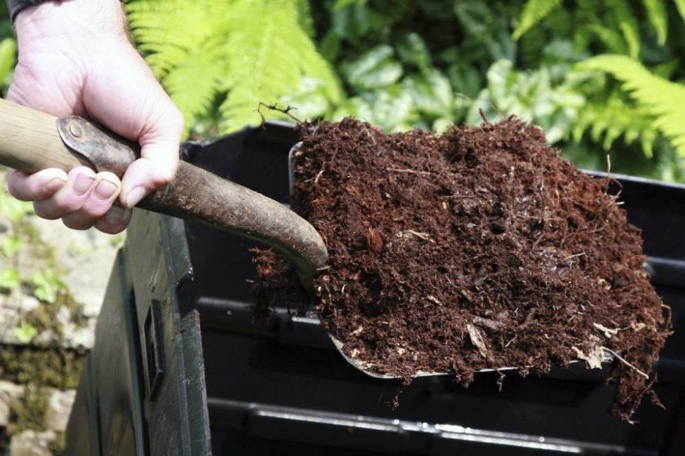 Хорошо перепревший компост имеет коричневый оттенок и хорошо слипается в ком