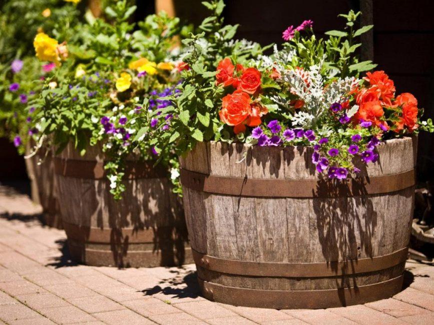 Растения в больших горшках удобряют реже
