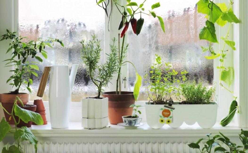Цветы на подоконника - одна из самых распространенных причин конденсата на окнах