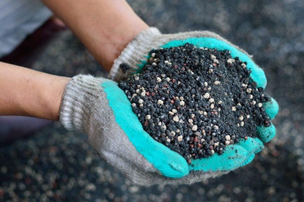 В августе осуществляется подкормка минеральными удобрениями
