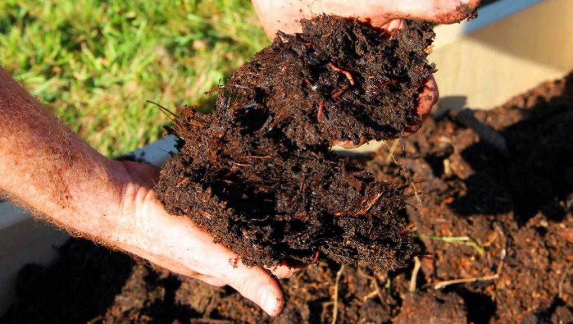 Осенью на участок с циннией необходимо внести органические удобрения