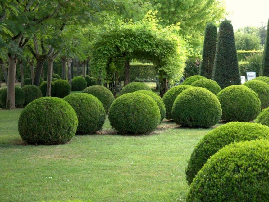 В ландшафтном дизайне буксус широко распространён и используется для создания самых причудливых форм живых изгородей