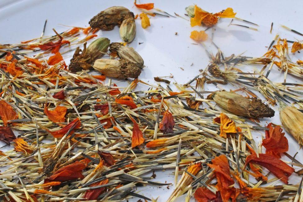 Семенные коробочки и семена бархатцев