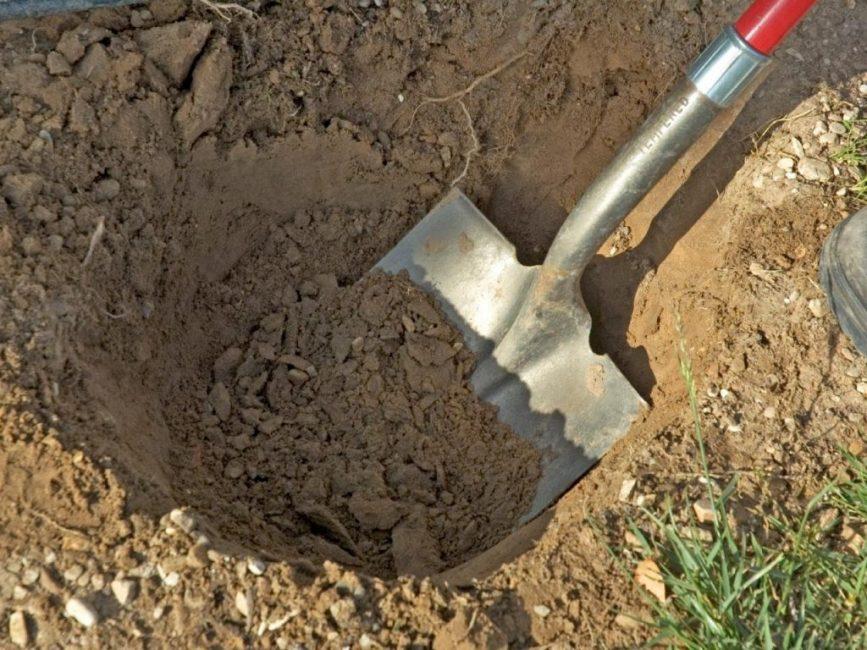 Посадочную яму лучше приготовить заблаговременно