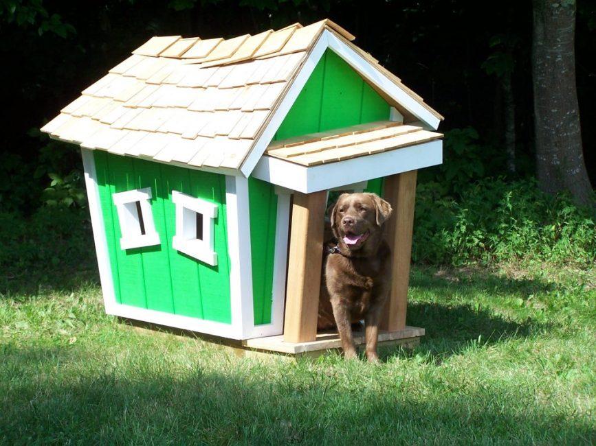 выбор места для собачьей будки