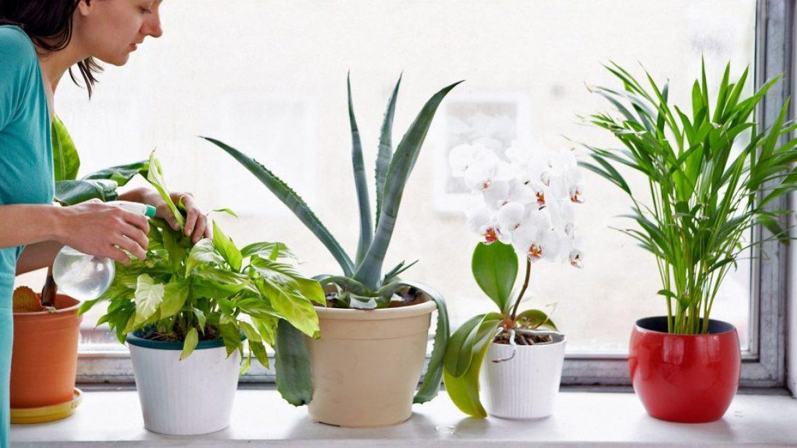 К каждому растение необходим индивидуальный подход при подкормке