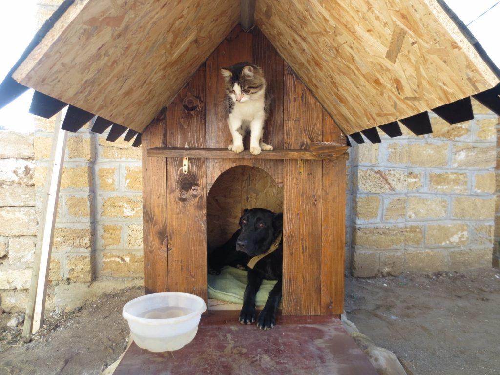 Собачья будка своими руками размеры и чертежи фото 765