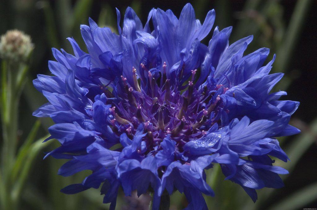 Аквариумные цветы фото всего
