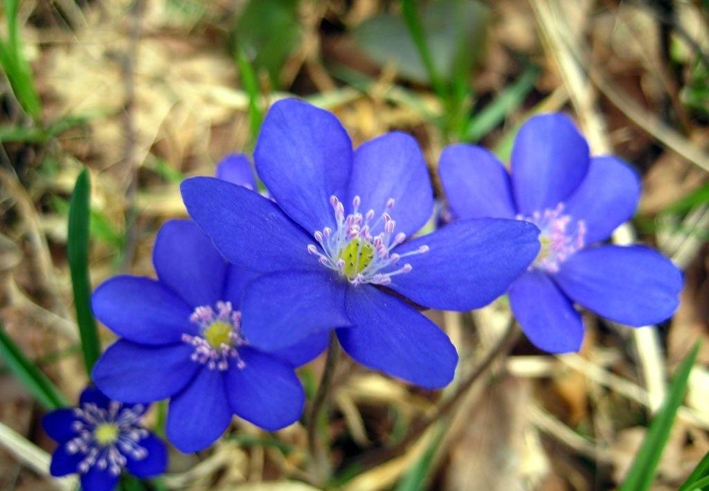 лесные цветы картинки и названия цветов фото рецепт