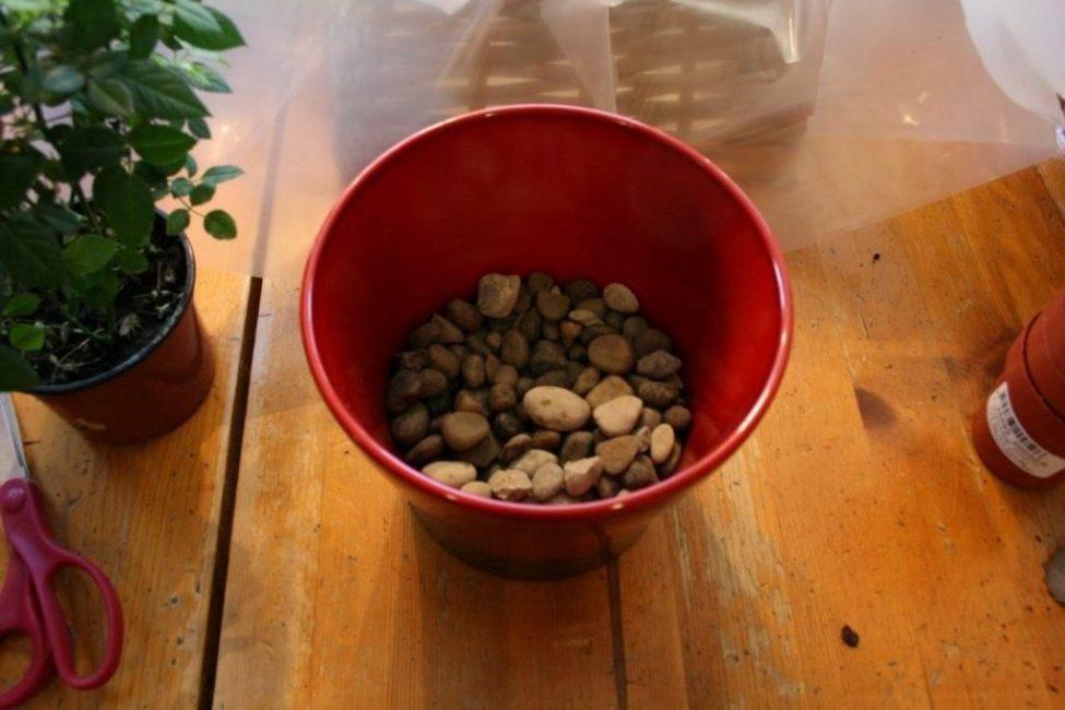 На дне горшка должен располагаться дренаж, высотой примерно ¼ высоты горшка.