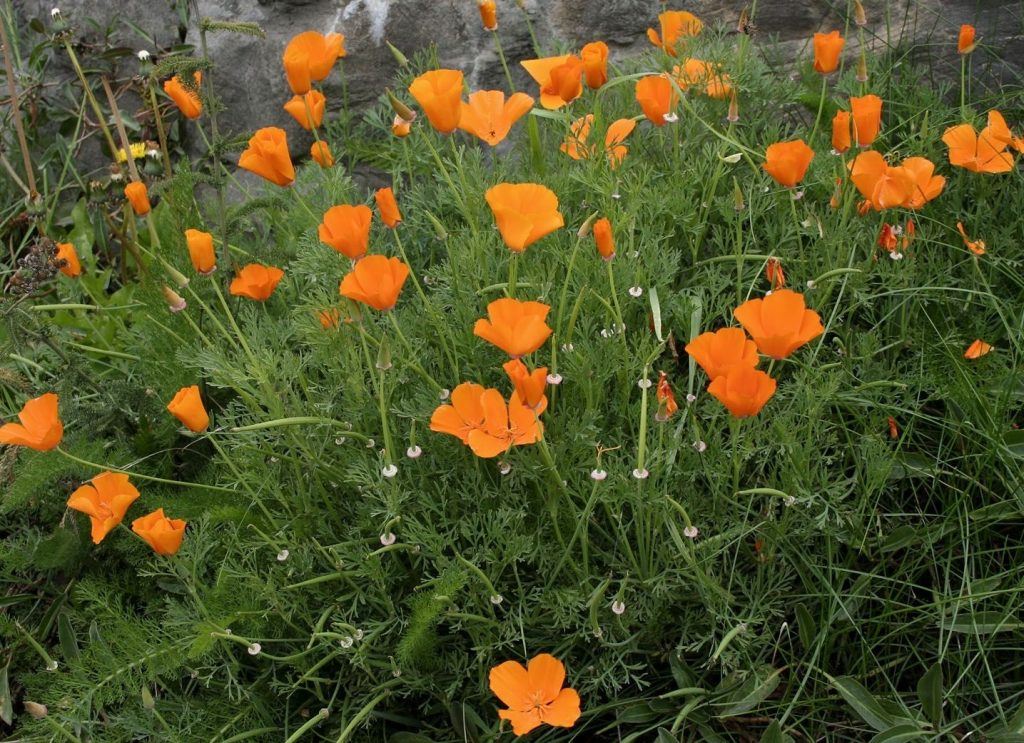 какие цветы любят песчаную почву с фото модная разновидность