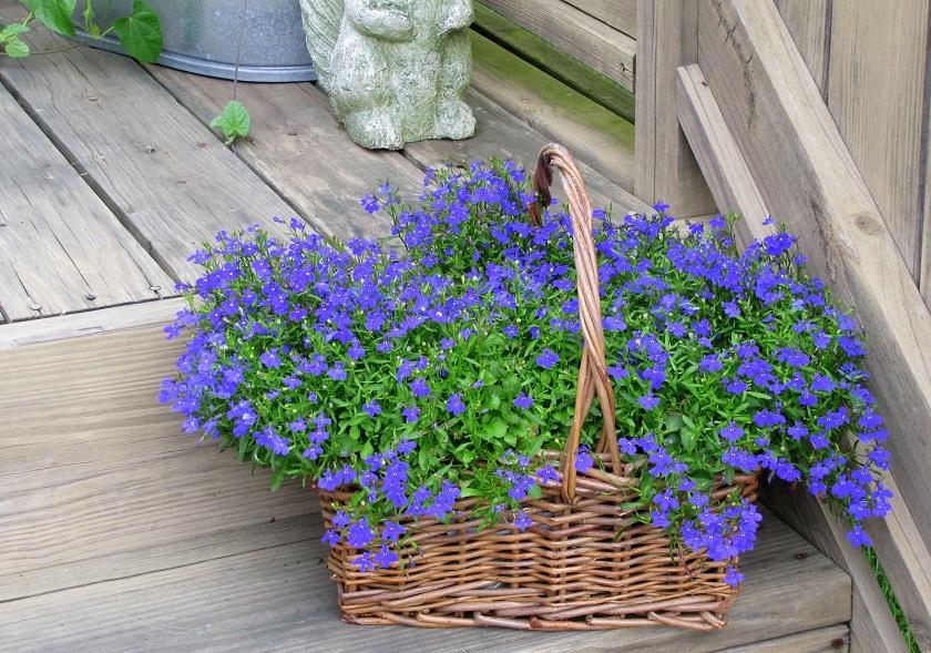Трава с синими цветами