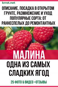 Малина — одна из самых сладких ягод. Описание, посадка в открытом грунте, размножение и уход. Популярные сорта: от раннеспелых до ремонтантных (25 Фото & Видео) +Отзывы