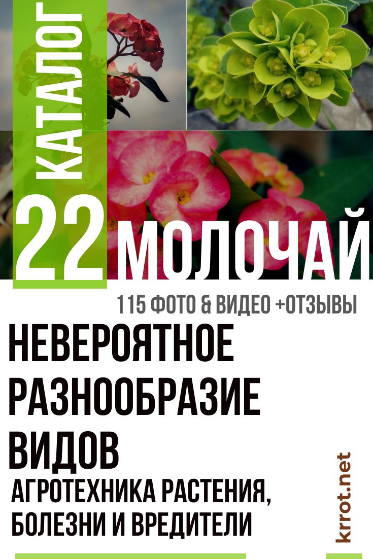Молочай комнатный агротехника и виды растения