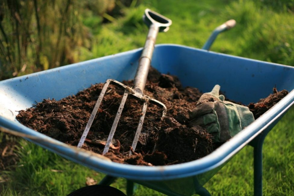 Внесение готового компоста