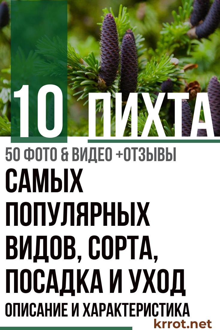 Пихта: описание и характеристика 10 самых популярных видов, сорта, посадка и уход (50  Фото & Видео)  Отзывы