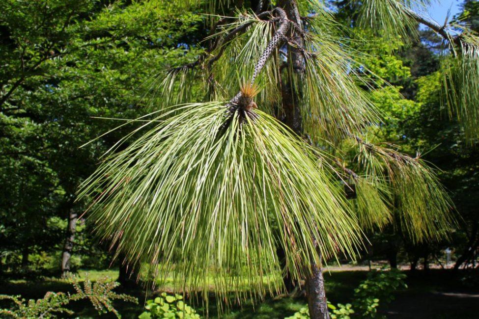 ТОП-35 Самых необычных и удивительных растений мира | (Фото & Видео) +Отзывы