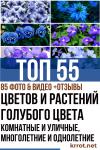 Цветы и растения голубого цвета