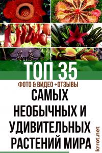 ТОП-35 Самых необычных и удивительных растений мира (Фото & Видео) +Отзывы