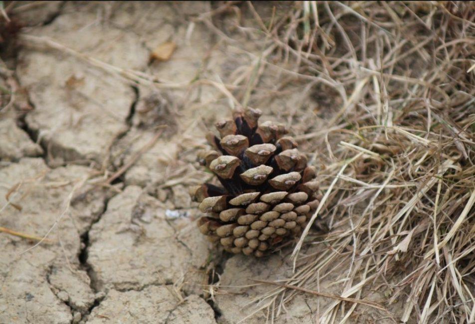 Нельзя допускать чрезмерного пересыхания почвы