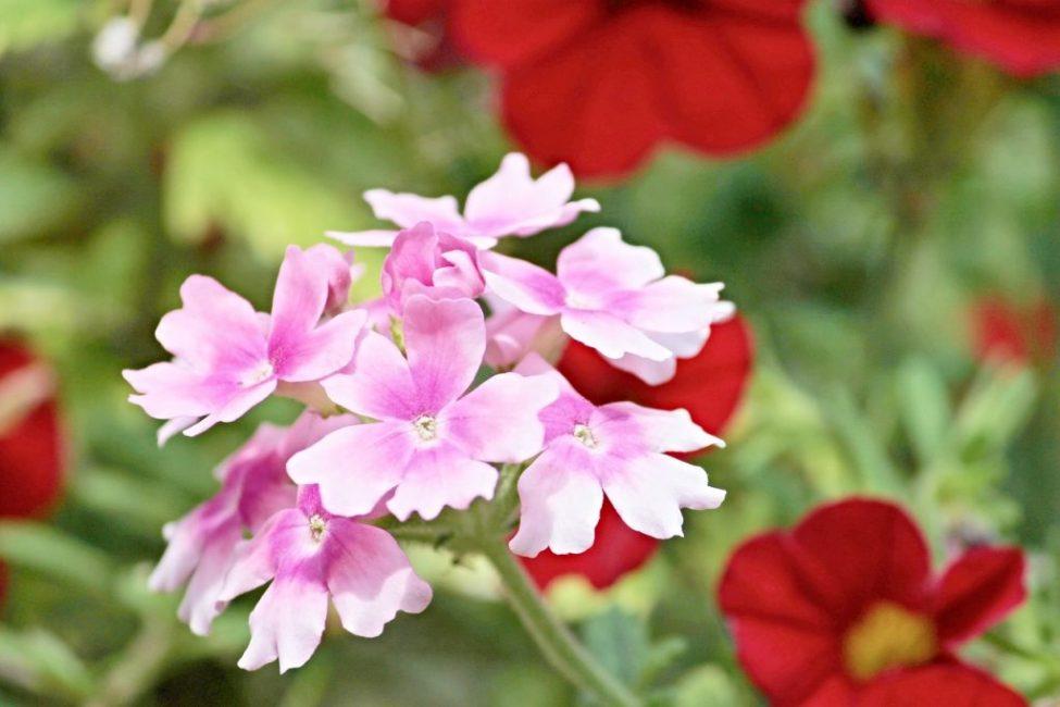 Наибольшей популярностью пользуются растения примерно десятка видов, имеющих ареалы обитания практически по всему миру.