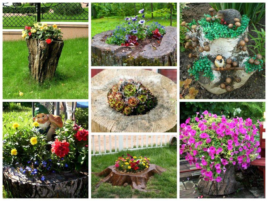 Варианты цветников, расположенных в пнях