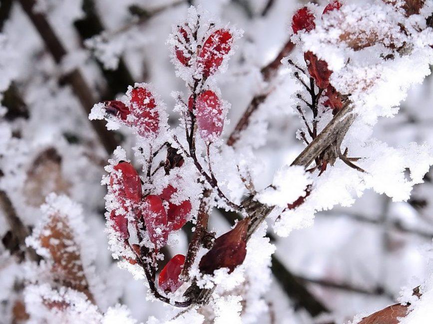 Восхитительное зимнее зрелище
