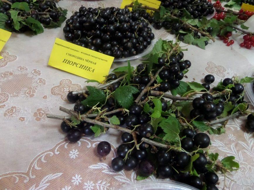 Выбирая сорт кустарника для посадки, нужно ориентироваться на агротехнические характеристики растения
