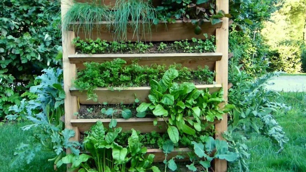 Высадка зелени