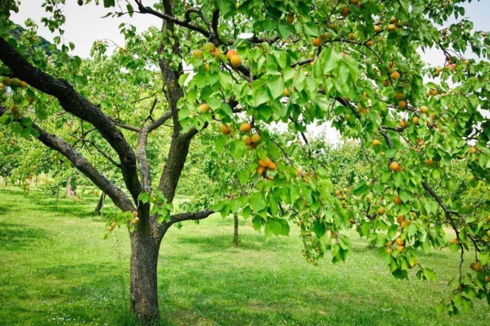 Дерево, растущее на теплом и солнечном участке