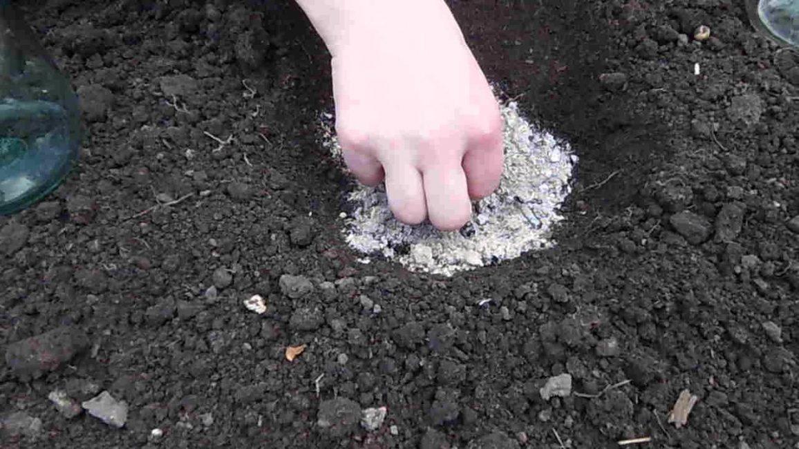 Лунка для посадки семян в открытый грунт