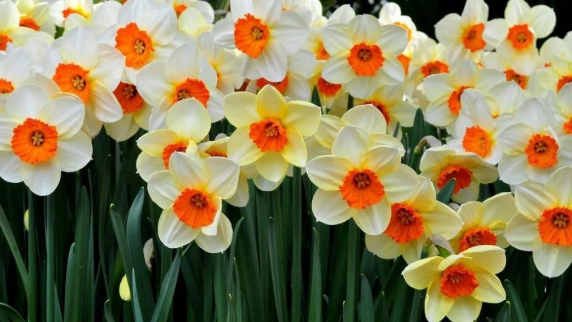 Отличительная черта весенних цветов – контрастный окрас лепестков и околоцветника
